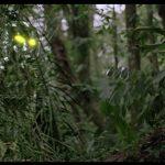 Predator - Ultimate Hunter Édition (2010) - Capture Blu-ray
