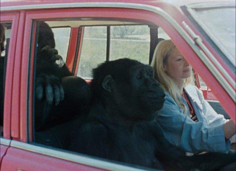 Barbet Schroeder - Koko