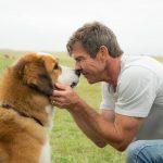 Mes vies de chien (2017) de Lasse Hallström